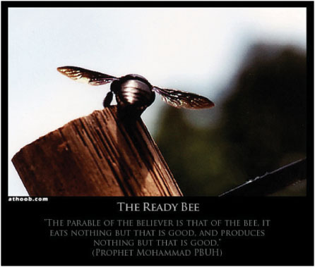 The Ready Bee